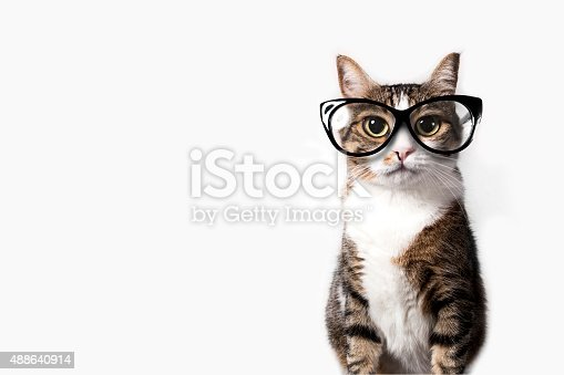 istock Domestic cat with eyeglasses. 488640914