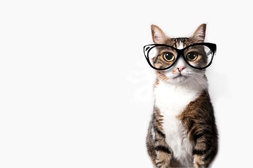 istock Domestic cat with eyeglasses. 488640914