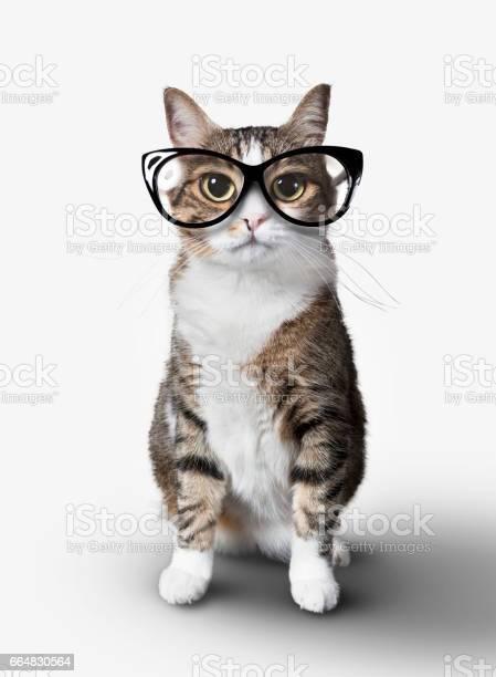 Domestic cat with eyeglasses picture id664830564?b=1&k=6&m=664830564&s=612x612&h=qfngfhhoajbi9cj41y7qz2dwze6hvmue8zqprw5o750=