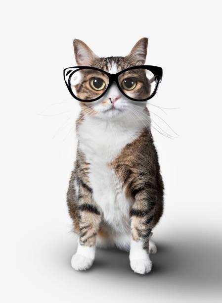 Domestic cat with eyeglasses picture id664830564?b=1&k=6&m=664830564&s=612x612&w=0&h=og6otzxhr0lllr3ollkugnl7k4vm cunq8ejqf8ohaq=