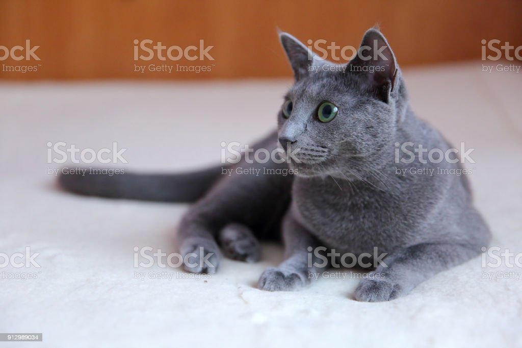 Domestic Cats Are Great Pets To Cuddle And Hug Stock Photo Download Image Now Istock