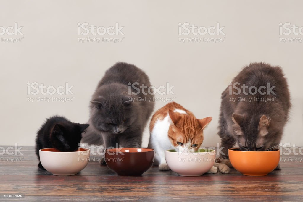 Domestic cats eat pet food on the floor from bowls стоковое фото