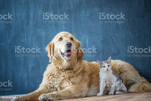 Domestic dog and cat picture id610440348?b=1&k=6&m=610440348&s=612x612&h=oj3nzlhm7eb7fsflnsouibnzm4z32sovyxvkdday0yg=