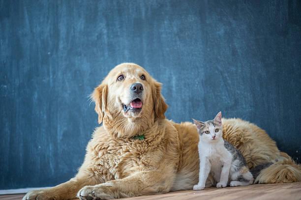 Domestic dog and cat picture id610440348?b=1&k=6&m=610440348&s=612x612&w=0&h=bfneea5ty zvcecw jbxixcvq1iuetzw7k7ul1pvo k=