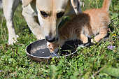 istock Domestic dog and cats eat together pedigree 1177683718
