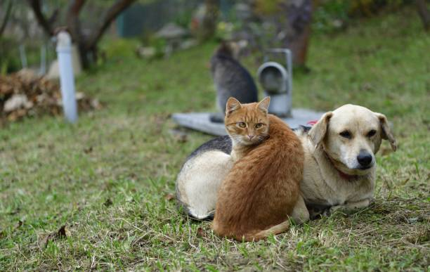 Domestic dog and cats to snuggle together as best friends in love stock photo