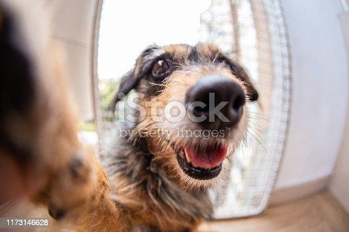 Dog is taking a selfie
