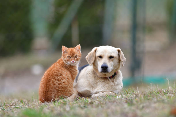 Domestic dog sleeping on the grass along with carroty cat as a best friends stock photo