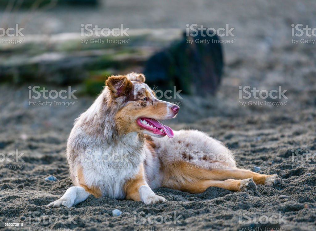 Domestic dogs playing in a public park foto de stock royalty-free