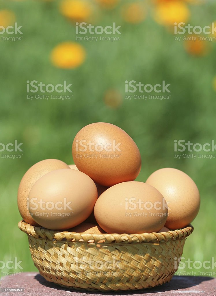 domestic eggs royalty-free stock photo