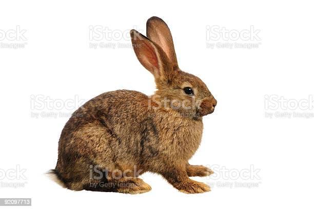 Domestic european rabbit picture id92097713?b=1&k=6&m=92097713&s=612x612&h=o3kbivgsxy78dqog hyyhxv2j2zwrubmqknkee6jgfg=