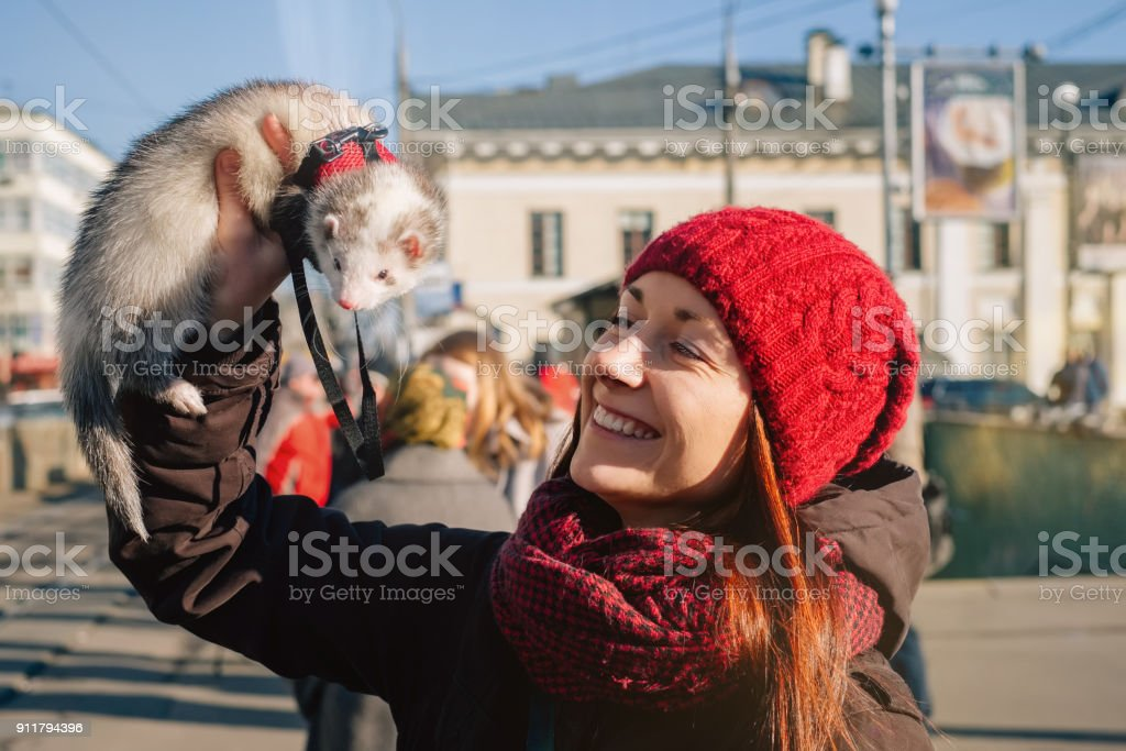 Domestic ferret and its happy owner on a walk stock photo