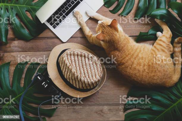 Domestic ginger cat acts as human working on laptop computer on wood picture id969094292?b=1&k=6&m=969094292&s=612x612&h=qe o2bffd9tz7louiqokxxhg6iecgohpyl mved71u4=