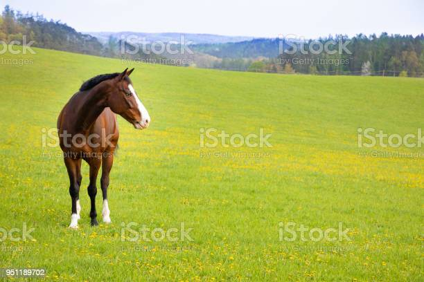 Photo of Domestic horse on a field