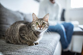 Domestic kitten sitting on the sofa with its owner