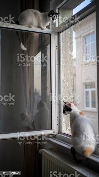 Domestic life cat picture id1211658479?b=1&k=6&m=1211658479&s=612x612&h=cs7uxepwjpql2lszva5nffgjcijrv6gmdtn2 tubap8=
