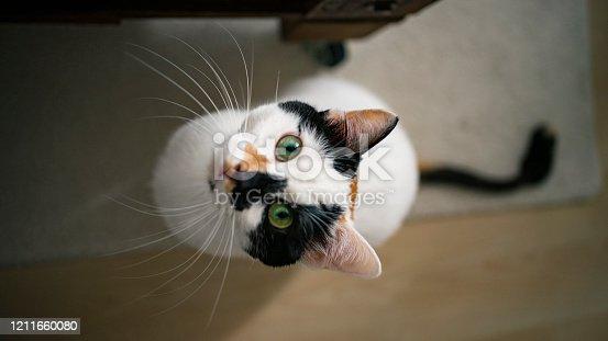 istock Domestic life cat 1211660080
