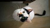 Domestic life cat