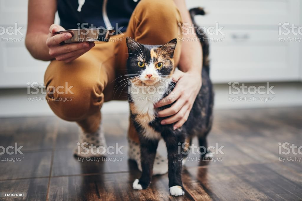 Domestic life with cat foto stock royalty-free