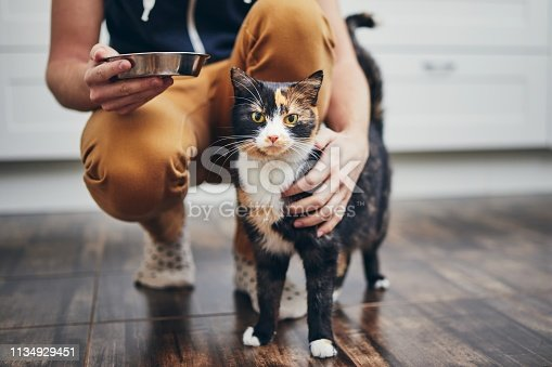 Domestic life with pet. Man holding bowl with feeding for his cat.