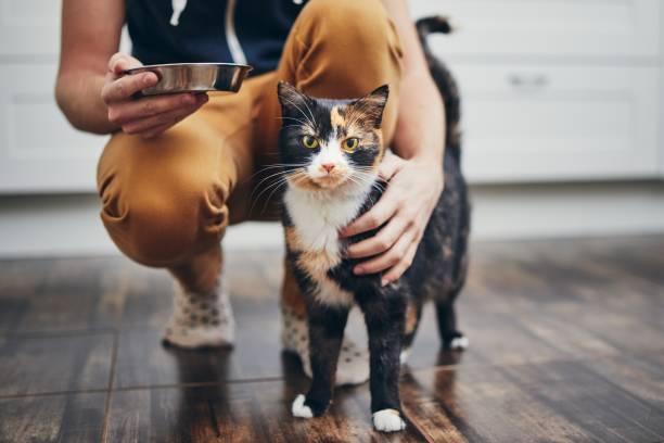 hausleben mit katze - füttern stock-fotos und bilder