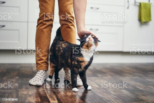 Domestic life with cat picture id1134929540?b=1&k=6&m=1134929540&s=612x612&h=zlw zxzgap5uxcj3e7cromii rovulxxr9yqyyzvbug=