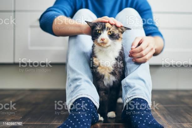 Domestic life with cat picture id1162592762?b=1&k=6&m=1162592762&s=612x612&h=w9m40nzxqs93ecz0rhnvmawxpyjcw bxrtu jxg2fki=