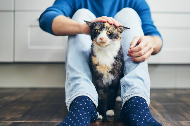 Domestic life with cat stock photo