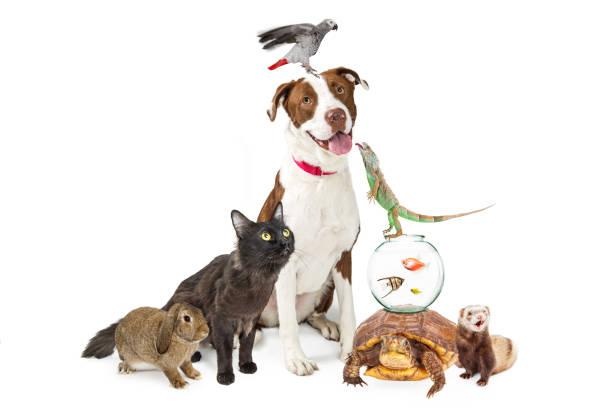inhemska husdjur grupp tillsammans med kopia utrymme - art bildbanksfoton och bilder