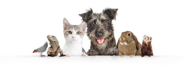 bandera nacional mascotas colgante sobre blanco web - mascota fotografías e imágenes de stock