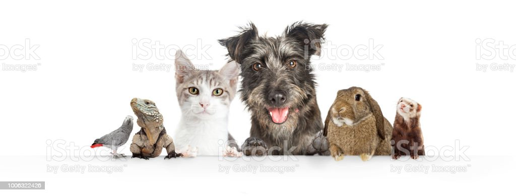 Domestic Pets Hanging Over White Website Banner stock photo