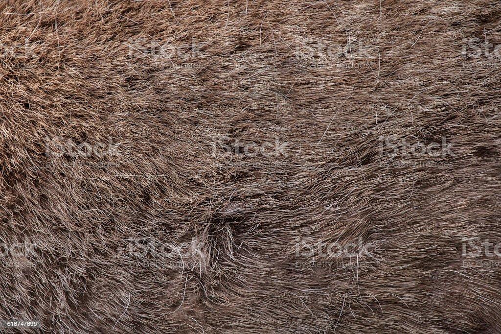 Domestic reindeer (Rangifer tarandus f. domestica). Skin texture stock photo