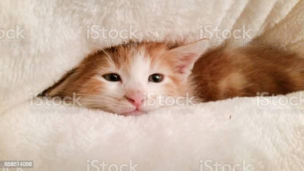 Domestic sleepy kitten in bed picture id658514058?b=1&k=6&m=658514058&s=612x612&h=qo3jigwetuxupth 8xwcigjmffbouvvzciwhn2g778w=