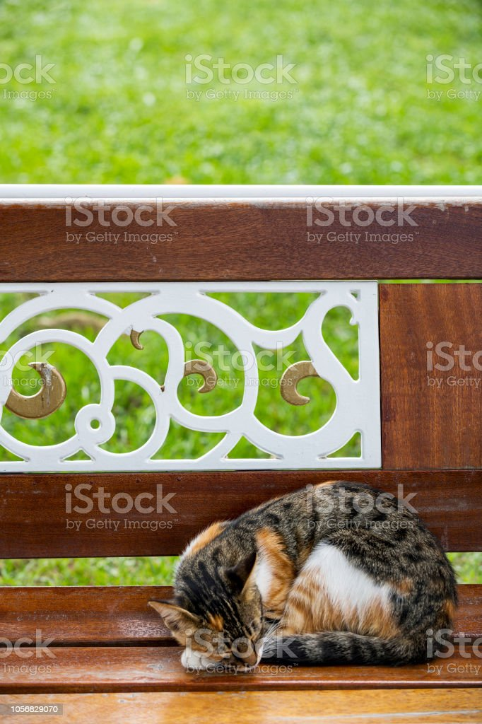Domestic stray cat is sleeping on bench in the garden, Turkey.