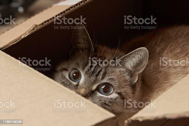 Domestic tabby cat hiding at paper box domestic pet picture id1199746258?b=1&k=6&m=1199746258&s=612x612&h=pycbvkvozcalvx5smb4hniiz0s ro cdaklqqlkrmzs=