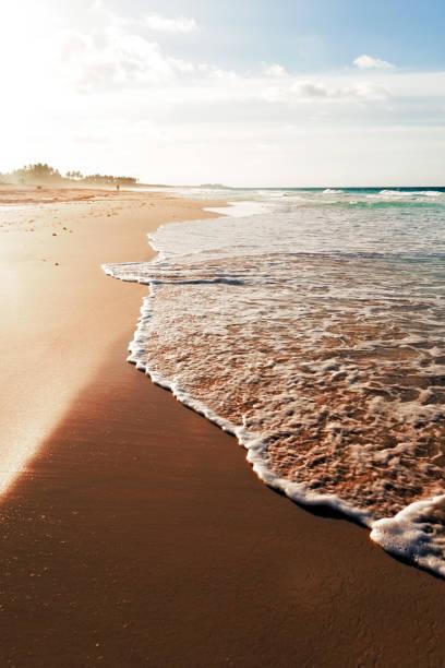 Dominican Republic, Palm trees on beach stock photo