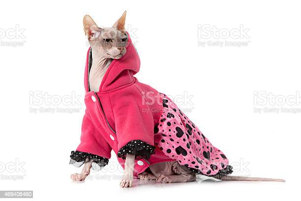 Don sphinx cat dressed with jacket picture id469408460?b=1&k=6&m=469408460&s=612x612&h=txvxz xpavjfqmlrjpvnhv4aggk9kk jf46eguzm3kw=