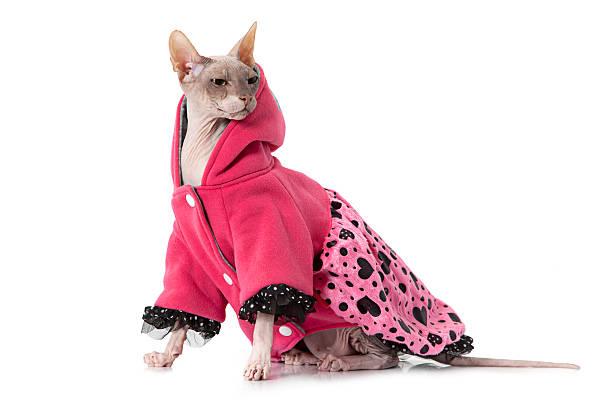 Don sphinx cat dressed with jacket picture id469408460?b=1&k=6&m=469408460&s=612x612&w=0&h=mgwhmnjibtcqulh0tk0unz8pjw2zsxszfiazixbbwdi=