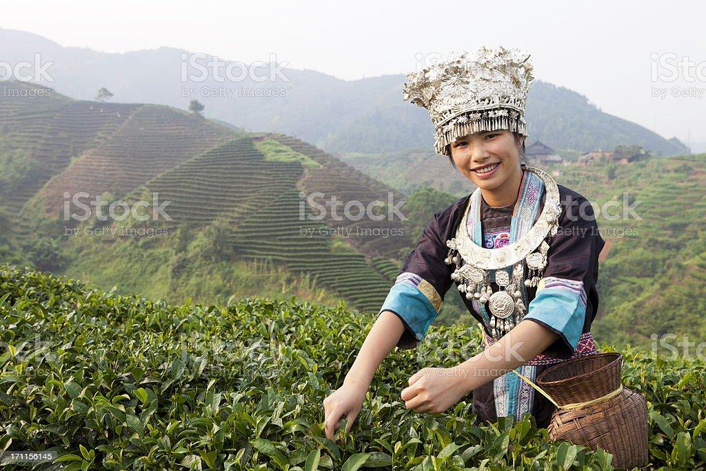 Dong Tribe Tea Picker royalty-free stock photo