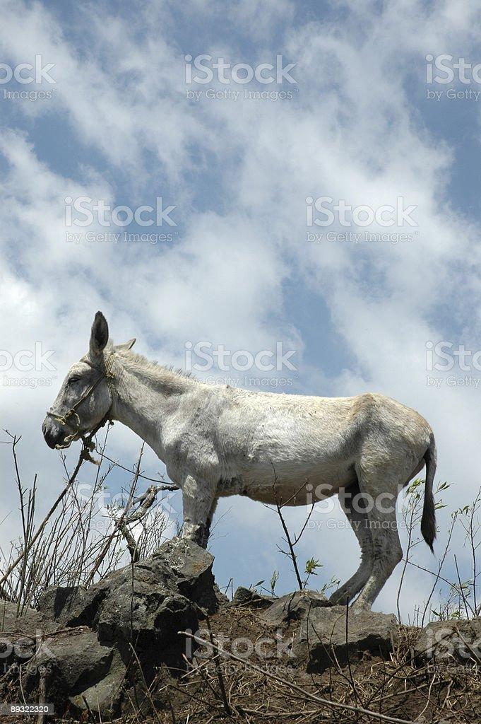 Donkey against Sky royalty-free stock photo