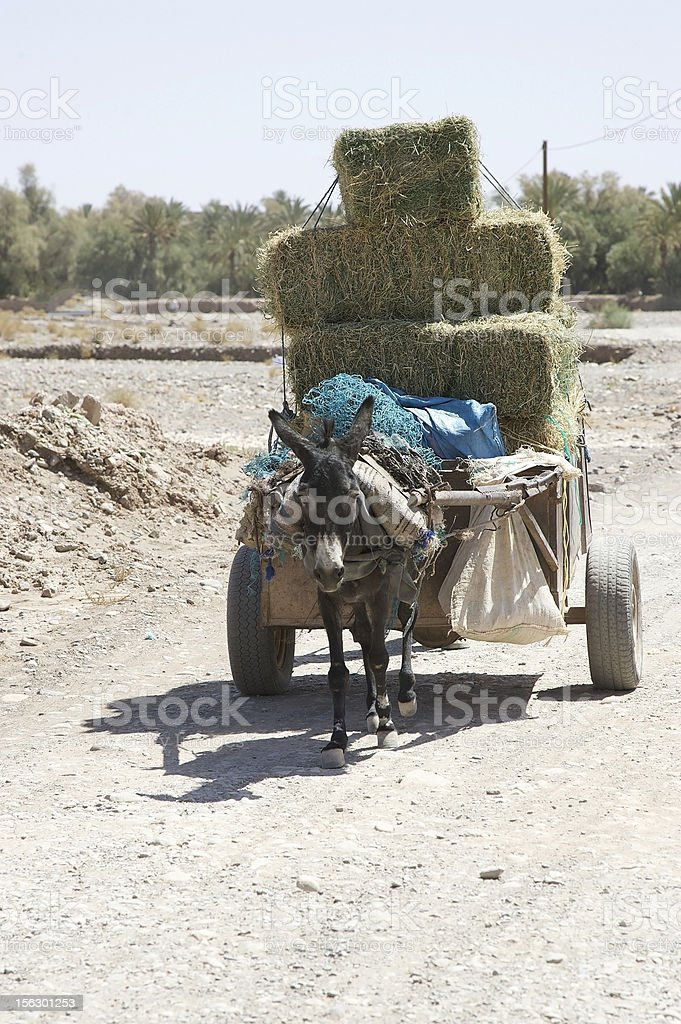 Donkey (Equus africanus asinus) and carriage royalty-free stock photo