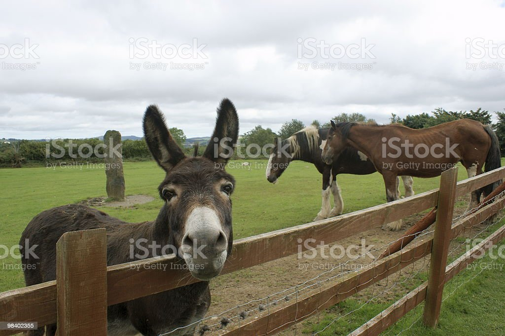 Donkey and two horses royalty-free stock photo