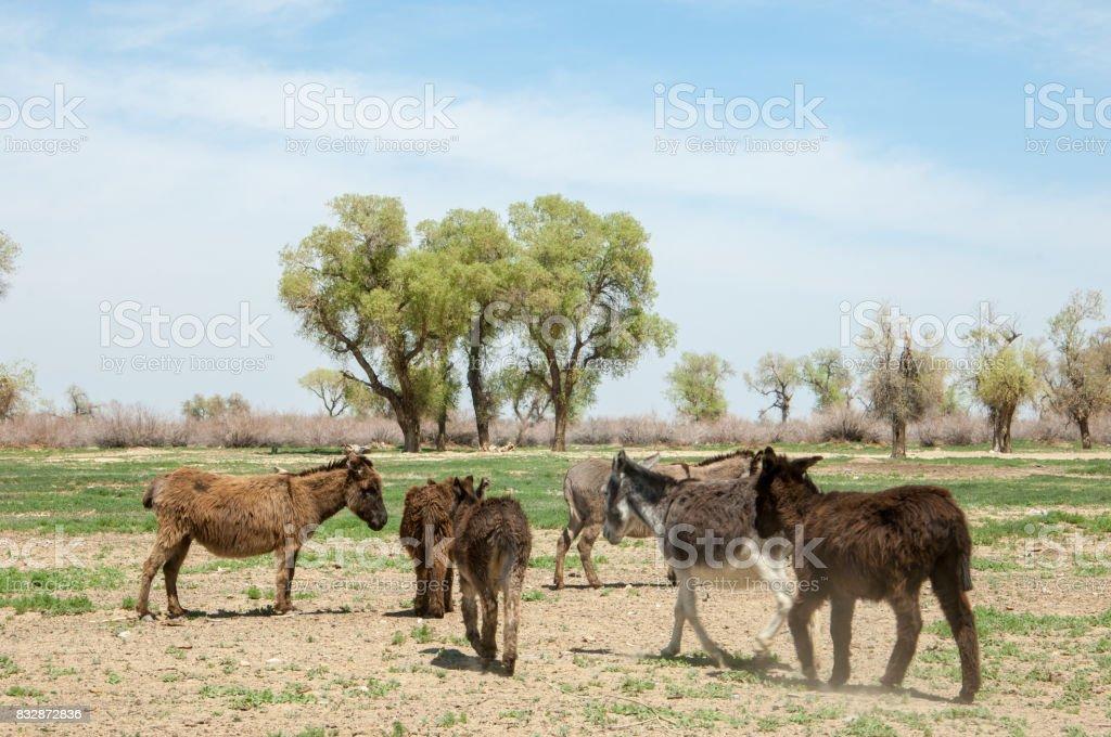 donkey, ass, jackass, goat, moke, neddy, burro, neddy stock photo