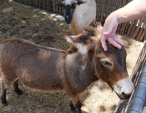Donkey at a petting zoo