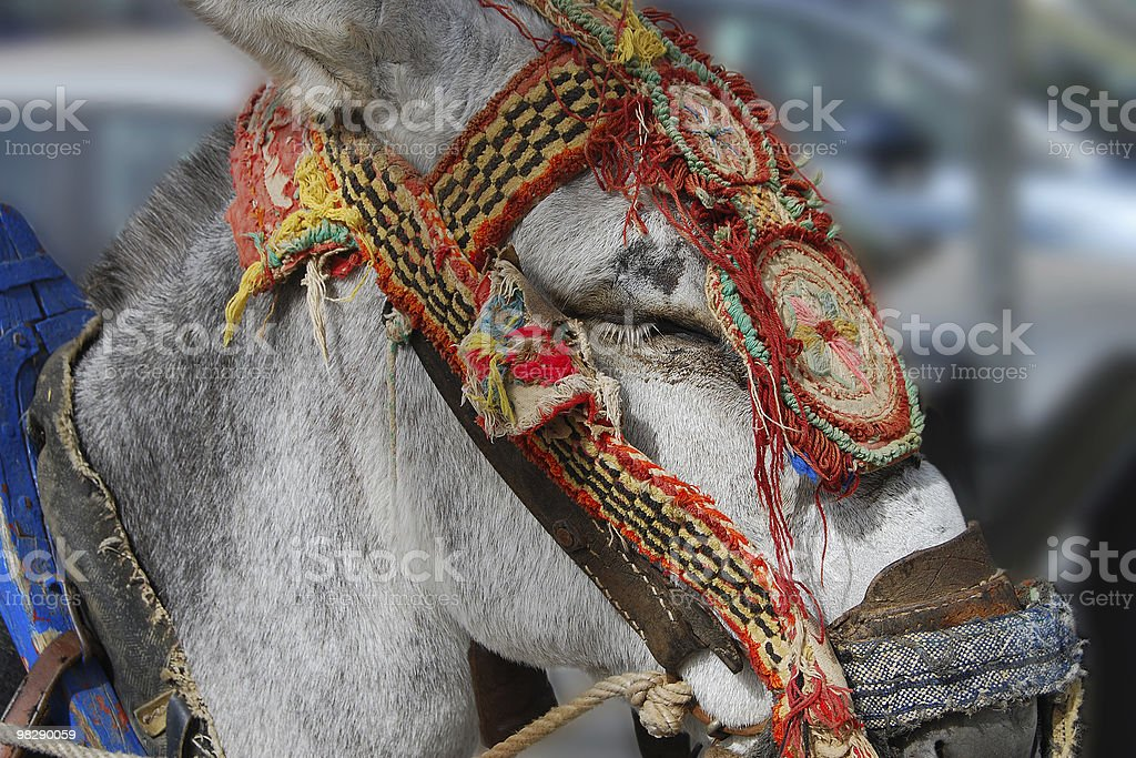 Donkey a Mijas.  In Spagna foto stock royalty-free