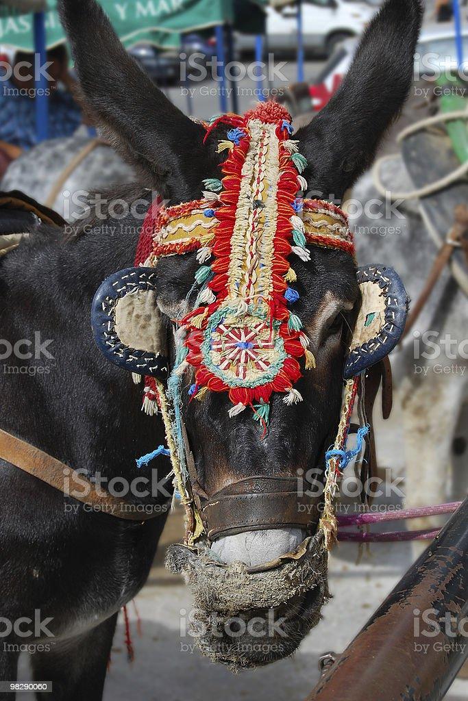 Donkey at 미하스. 스페인 royalty-free 스톡 사진