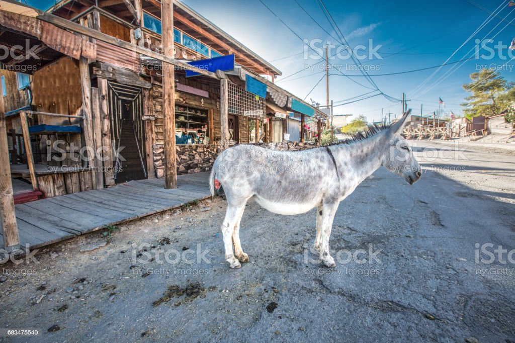 Donkey at Oatman, Arizona stock photo