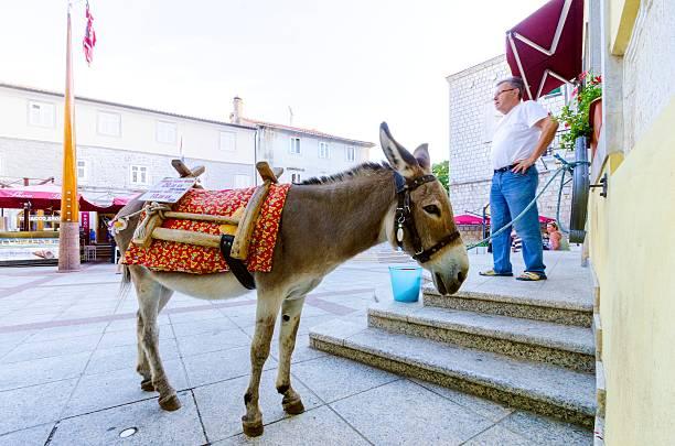 donkey at vale market place, krk town, croatia - römisch 6 stock-fotos und bilder