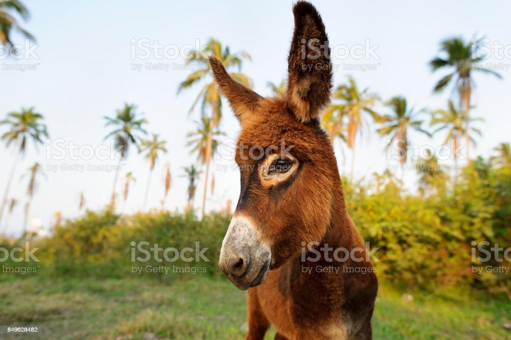 Esel Baby – Foto