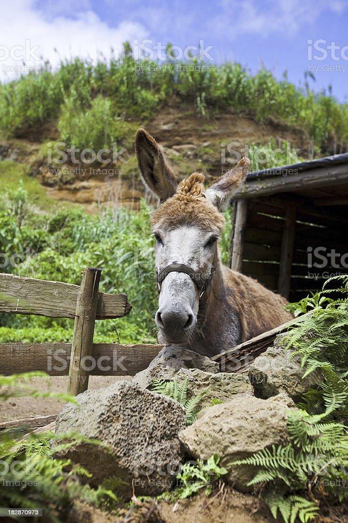 Donkey behind a fence stock photo